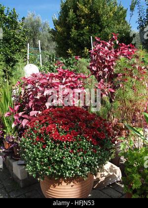 Pretty flowers in pots on patio in Corfu Greece - Stock Photo