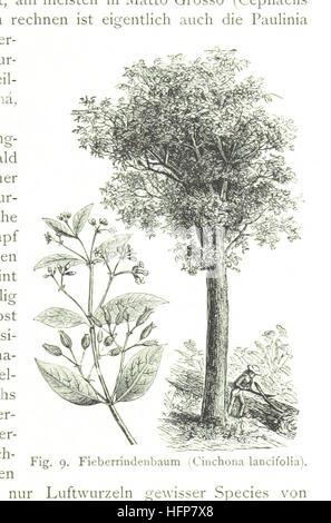 Image taken from page 73 of 'Das republikanische Brasilien in Vergangenheit und Gegenwart, etc. [With illustrations and maps.]' Image taken from page 73 of 'Das republikanische Brasilien in