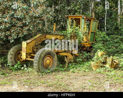 Abandoned yellow grader overgrown by jungle vegetation near border between Nigeria and Cameroon, Africa - Stock Photo