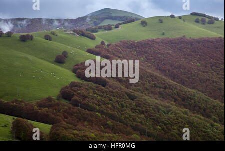 Frost-damaged high-altitude beechwoods in Monti Sibillini National Park,  Apennines, Italy. - Stock Photo