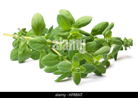 Fresh Marjoram (Origanum majorana), cut stem with leaves. Clipping paths, shadows separated - Stock Photo