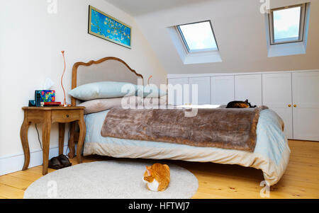 Editorial photograph of a loft bedroom. There are two cats in teh image and it is a clear blue sunny day which can - Stock Photo