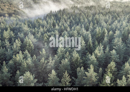 Panoramic view of misty coniferous wood forest in retro, vintage style. Foggy landscape with green spruces. - Stock Photo