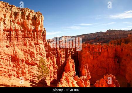 Bryce Canyon, National Park, Utah, USA - Stock Photo