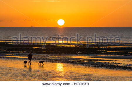 Walking dogs on the beach in freezing weather as the sun rises over the sea in the UK. - Stock Photo