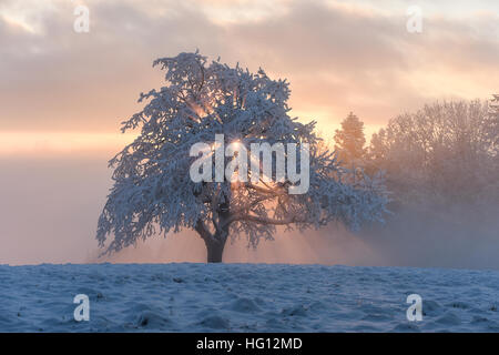 Ravensburg, Germany. 03rd Jan, 2017. Weather. The sun sets behind a snow covered tree in the fog in Ravensburg, - Stock Photo