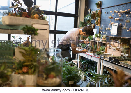 Male shop owner watering bonsai plants in plant shop - Stock Photo