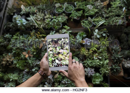 Personal perspective man photographing plants with digital tablet camera - Stock Photo