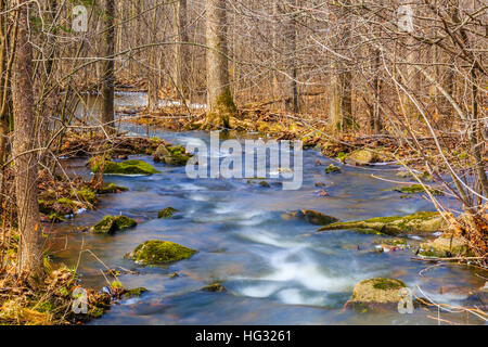 Woods with a stream flowing in the Wisconsin spring time. - Stock Photo