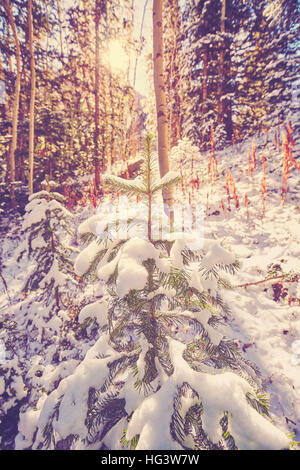 Vintage toned picture of a winter forest against sun. - Stock Photo