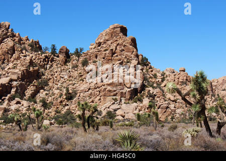 Joshua, mesquite trees and scrub brush in front of and growing on mountainous rock formations in Joshua Tree National - Stock Photo