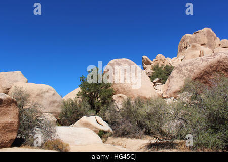 Mesquite trees and scrub brush growing in unique rock formations at Hidden Valley Picnic Area Trail in Joshua Tree - Stock Photo