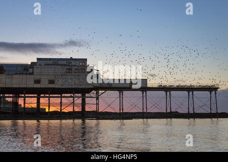 Thousands of Starlings (Sturnus vulgaris) coming in to roost on the pier in Aberystwyth, Ceredigion, Wales, UK - Stock Photo