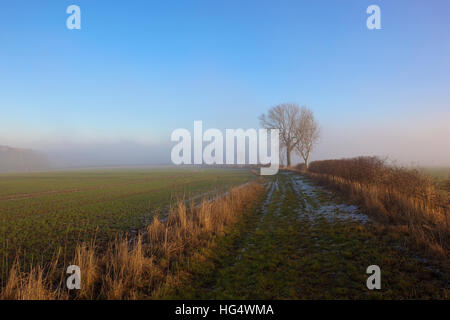 A frost covered footpath with an Ash tree near arable crops in a Yorkshire wolds landscape under a misty blue sky - Stock Photo