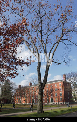 Harvard University campus on an autumn morning. Holworthy Hall appears in the distance. - Stock Photo