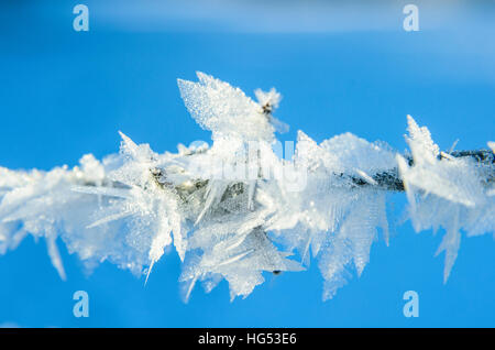 Ice-crystals on barbed wire in Lancashire England - Stock Photo