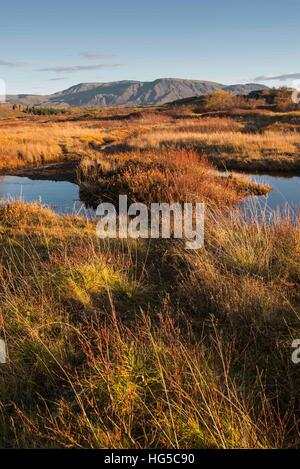 Autumn color with mountains in Thingvellir National Park, UNESCO, Iceland, Polar Regions - Stock Photo