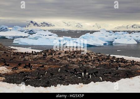 Gentou Penguin Colony 5 - Stock Photo