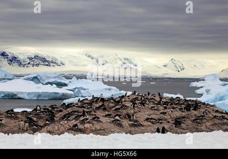 Gentou Penguin Colony 4 - Stock Photo
