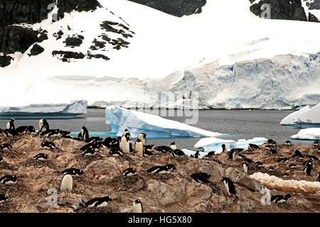 Gentou Penguin Colony - Stock Photo