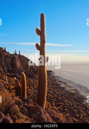 Bolivia, Potosi Department, Daniel Campos Province, Salar de Uyuni, View of the Incahuasi Island with its gigantic - Stock Photo