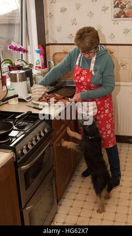 Family pet dog begging for sausages food in kitchen with lady Mum - Stock Photo