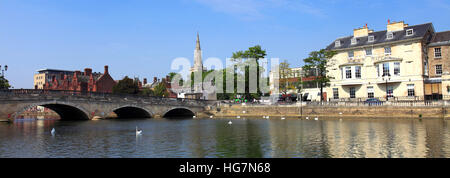 Summer view of swans on the river Great Ouse, Bedford town, Bedfordshire, England, UK - Stock Photo