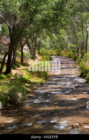 Bright Angel Creek flowing under cottonwood trees near the Bright Angel Campground. Grand Canyon National Park, - Stock Photo