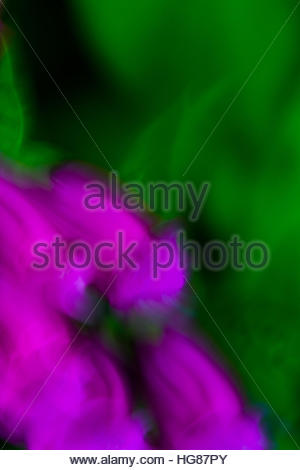 Purple abstract foxglove flowers are streaked in various patterns against a green, natural background - Stock Photo