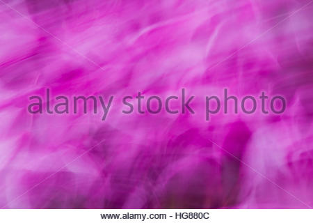 Purple swirls and wiggles of color and action in an abstract photo - Stock Photo