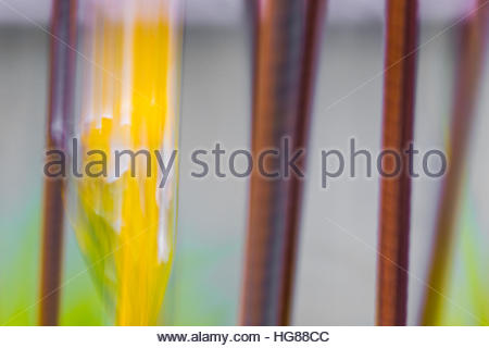 Straight vertical abstract lines of brown and yellow against a gray background - Stock Photo