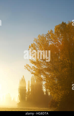 Trees growing on field against clear sky during sunset - Stock Photo