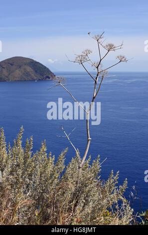 Sea view with dried flower on Lipari Island - Stock Photo