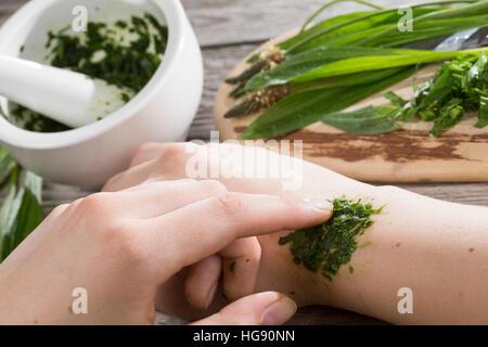 Spitz-Wegerich hilft bei Insektenstich, Mückenstich, Mückenstiche, zerkleinerte Blätter werden auf die juckende Hautstelle gelegt, Auflage, Hausmittel
