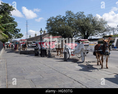 Mules and carriages waiting for customers outside Jackson Square, New Orleans - Stock Photo