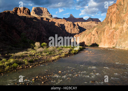 The Colorado River flowing past the the Bright Angel Campground in the Grand Canyon. Grand Canyon National Park, - Stock Photo
