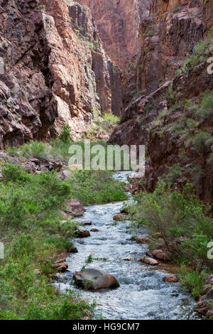 Bright Angel Creek flowing through the Vishnu Basement Rocks along the North Kaibab Trail. Grand Canyon National - Stock Photo