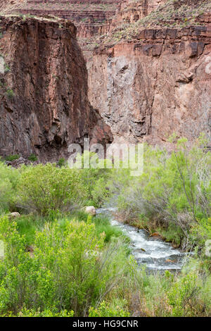Bright Angel Creek flowing past riparian vegetation toward the Grand Canyon Supergroup. Grand Canyon National Park, - Stock Photo