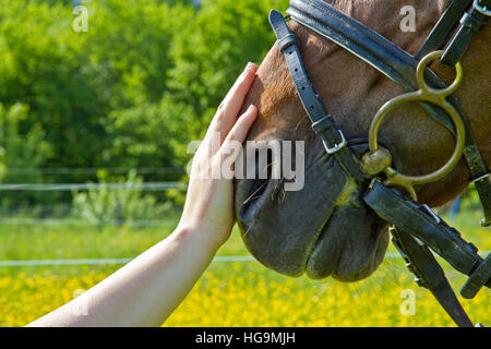 Hand of a woman makes a friendly gesture to a horse by stoking it's head - Stock Photo