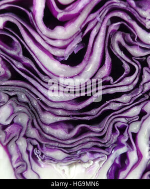Closed up Pattern and Texture of Fresh Ripe Purple Cabbage Cut in Half - Stock Photo