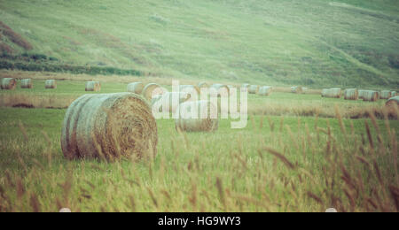 Hay bales scattered in a field after harvest. - Stock Photo