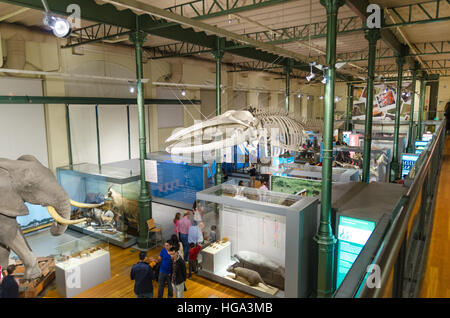 Madrid, Spain - November 17, 2012: Tourist visiting National science museum on November 17, 2012 in Madrid, Spain. - Stock Photo