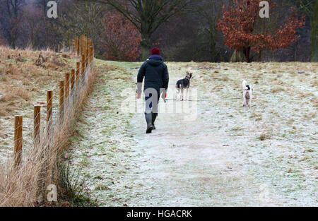 Ampthill, UK. 06th Jan, 2017. Taking her dogs for a walk on a frosty morning in Great Ampthill Park, Ampthill, Bedfordshire, UK on 6th January 2017 © KEITH MAYHEW/Alamy Live News