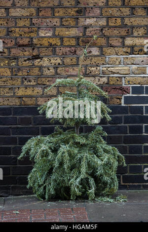 London, UK. 7th January 2017. A small abandoned Christmas tree on the street outside a block of flats in Wapping, - Stock Photo