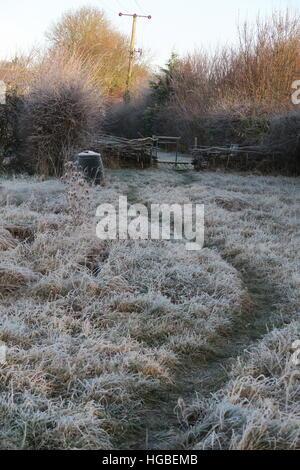 Hardy gardener - frosty path - Stock Photo