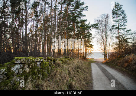 Coastal country road with an old mossy stone wall by roadside at the swedish island Oland - Stock Photo