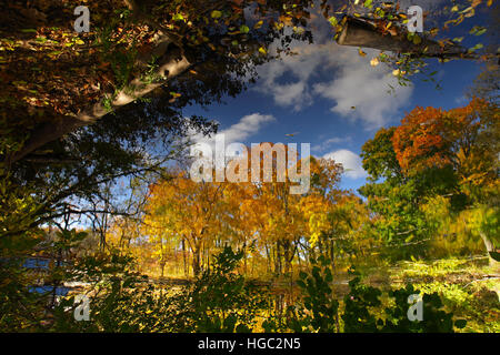 Inverted colorful art abstract reflection of autumn trees in a pond - Stock Photo