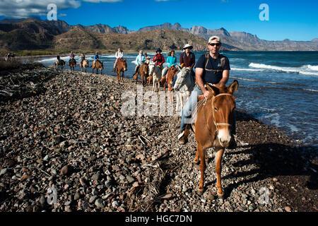 Horse ride in Agua Verde Bay, Sea of Cortes, Baja California Sur, Mexico. - Stock Photo