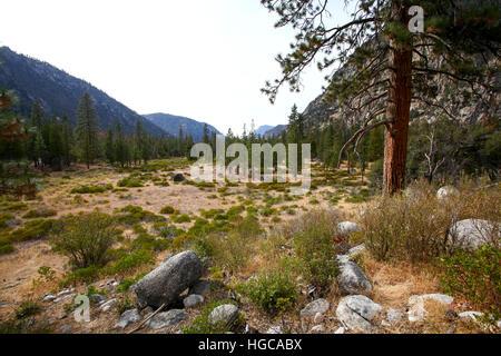 Sequoia and Kings National Park, California, USA - Stock Photo