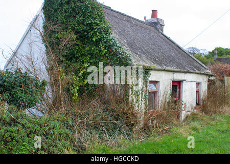 Derelict traditional Irish stone built farm cottage with an corrugated asbestos cement roof and overgrown with weeds - Stock Photo